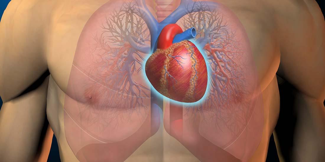 ¿Cuidas tus órganos vitales?